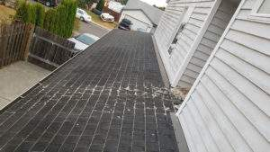 roof maintenance, roof shampoo, roof cleaning, moss removal portland, moss on roof, portland roofing contractor