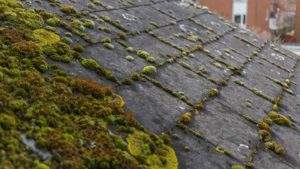 Roof Shampoo, roof moss removal, #mceroof, portland roofing contractor, how to remove moss off roof, best way to clean moss off roof, roof leak repair, moss removal portland