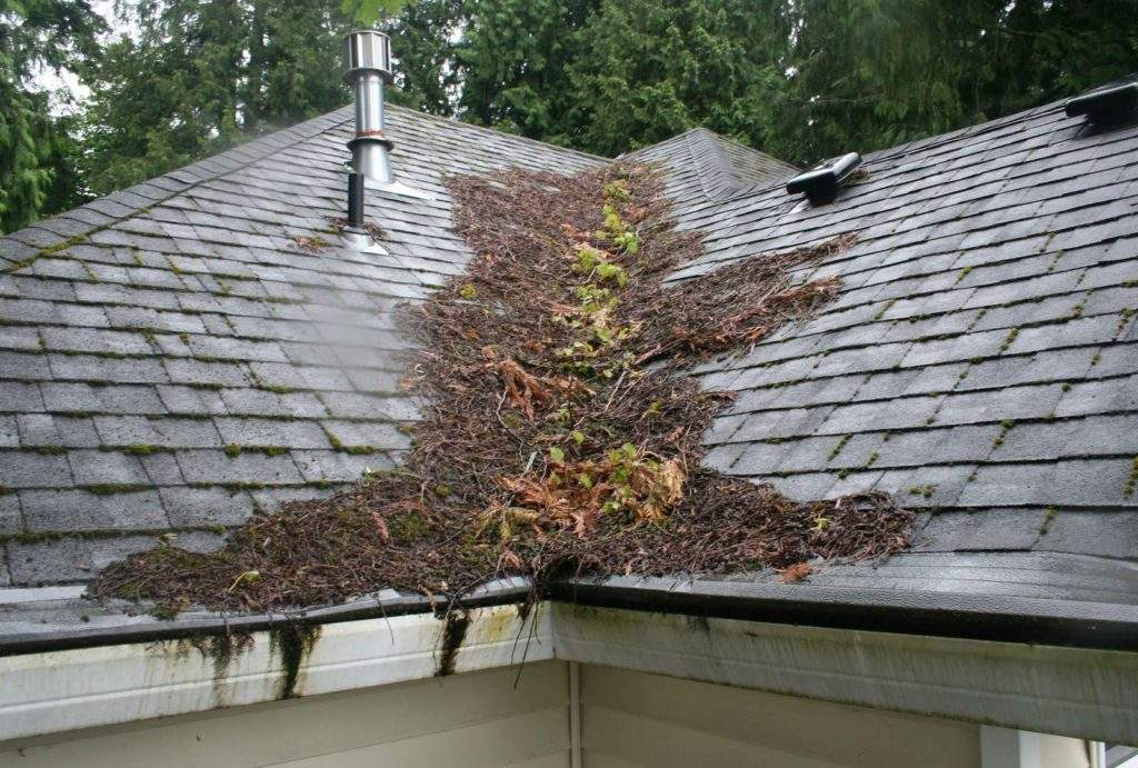 roof repair, roof maintenance roof leaks, debris on roof, roof replacement, importance of roof maintenance, roof maintenance tips, #mceroof, roof moss removal, roof contractors portland or, moss removal portland