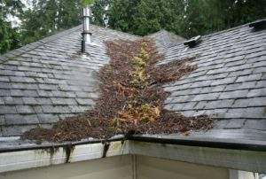 moss removal portland, roofing contractor near me, #mceroof, mce roofing, roof moss, roof cleaning, roofer near me