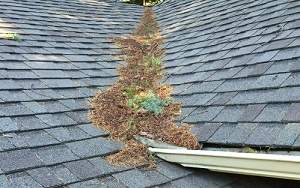 roof cleaning, roof repair, spring roof maintenance tips, marks custom exteriors, roof shampoo