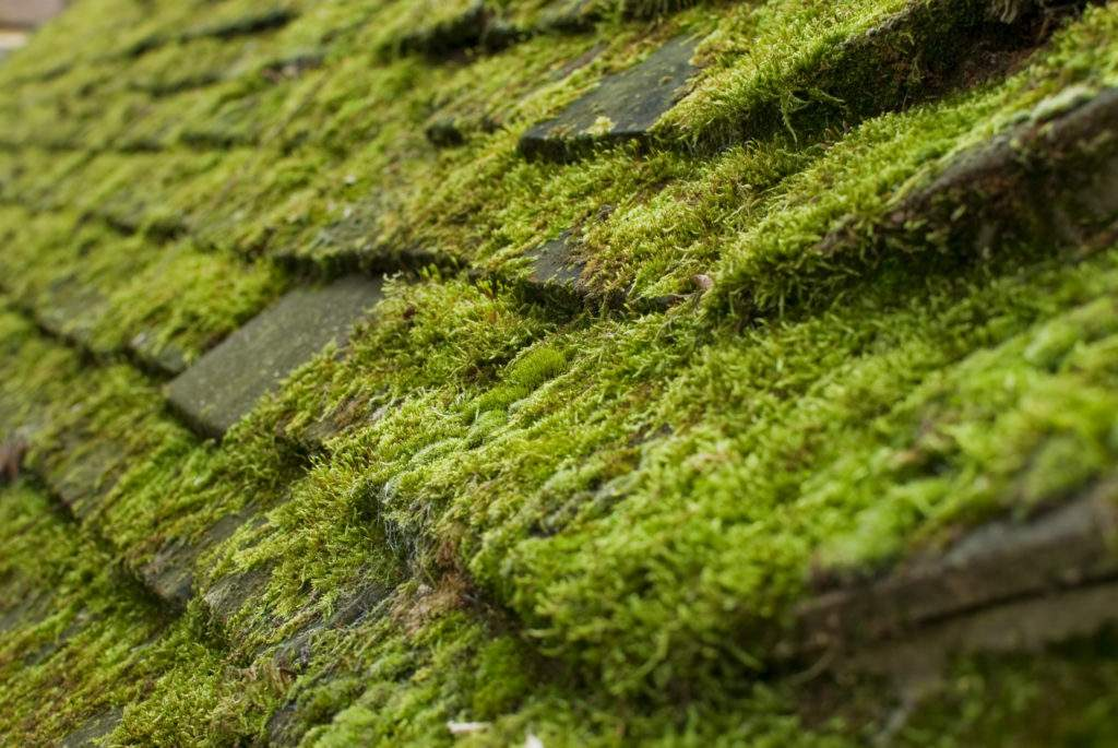 Roof-Cleaning-Moss-Removal