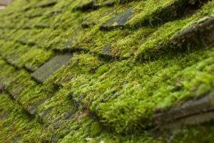 Moss on roofing shingles