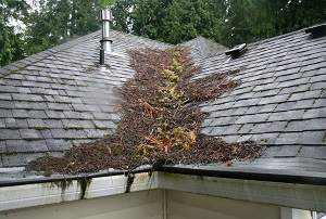 Roof-Debris-Leaky-Roof